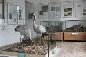 Ausstellung im Kranichinformationszentrum Groß Mohrdorf (c) Kranichschutz Deutschland